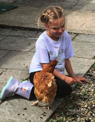 Give A Hen A Home - 13